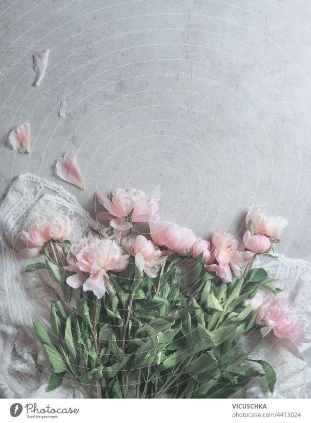 Rosa blasse Pfingstrosen Blumen auf weißem Spitzenstoff mit verstreuten Blütenblättern auf grauem Hintergrund.  Florale Komposition. Schönheit rosa Gewebe