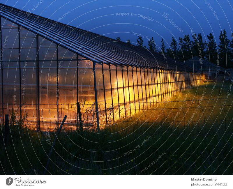 Gewächshaus bei Nacht blau Pflanze gelb Lampe Architektur Wachstum Landwirtschaft Ackerbau diffus Gewächshaus