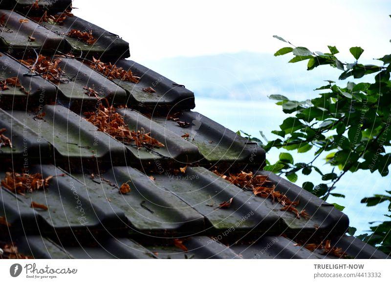 Dachziegeln schützen eine alte Schiffshütte am bewaldeten Ufer des Vierwaldstätter See (Lake Lucerne)  mit Blick auf den See und das gegenüber liegende Ufer mit Bergen