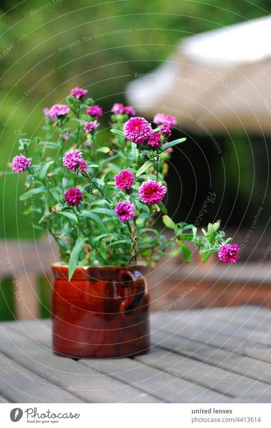 Blumen im Topf Blumentopf Biergarten idylle. schönheit Gartenblume Gartenidylle