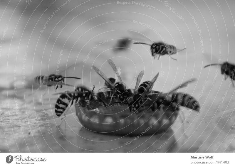 Wespentränke trinken Natur Tier Biene Tiergruppe Schwarm Kronkorken fliegen Schwarzweißfoto Außenaufnahme Menschenleer Schwache Tiefenschärfe Tierporträt
