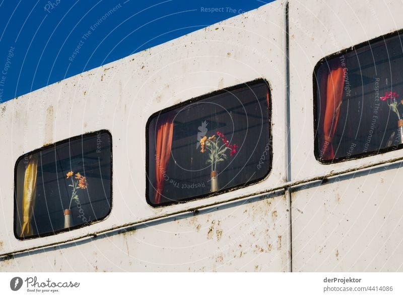 Blumen im Fenster eines alten Schiffs in Dänemark Naturerlebnis Lebensfreude Gedeckte Farben abstrakt Muster Strukturen & Formen Textfreiraum links