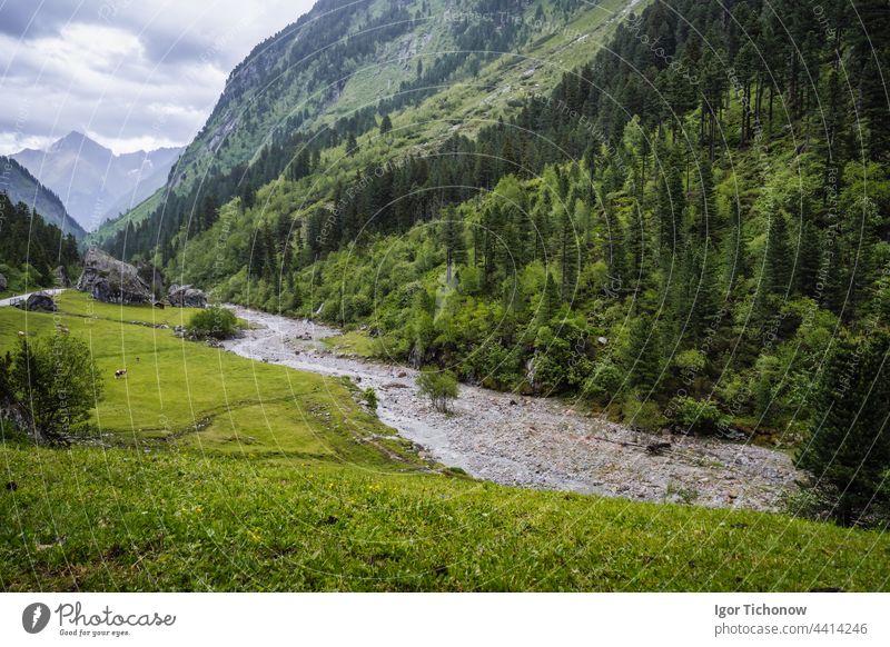 Tannenwald, Bergfluss im Tal. Zillertal, Österreich, Europa stausee Ansicht schön wandern tirol Trekking Wasser reisen Natur Baum Berge u. Gebirge Panorama
