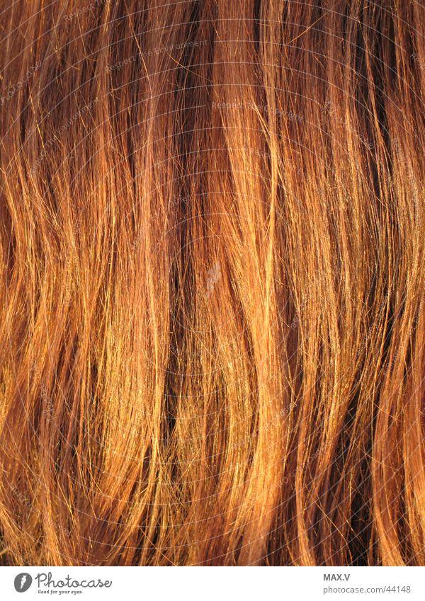 Ich liebe sie Haarsträhne lang glänzend Farbbrillianz blond rothaarig braun gepflegt langhaarig Haare & Frisuren Liebeserklärung