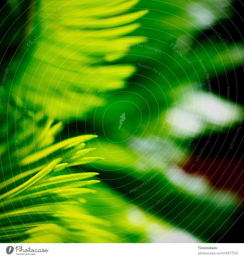 Grünerlei. grün Pflanze Blatt schwarz Gefühle natürlich Garten Wachstum Geschwindigkeit ästhetisch Grünpflanze