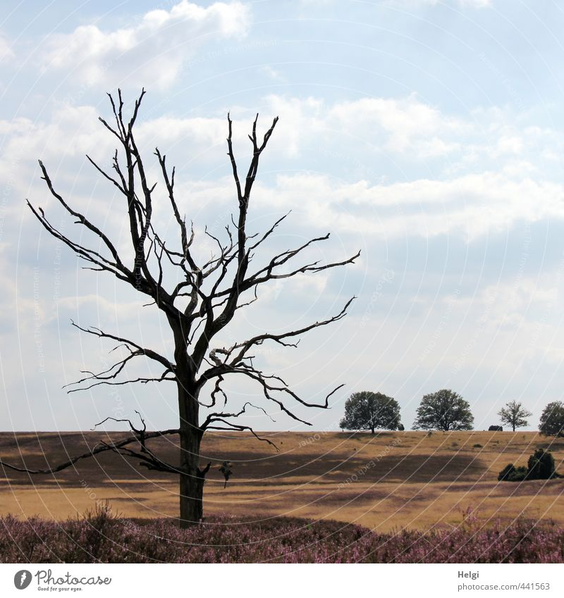 Dürre... Ferien & Urlaub & Reisen Tourismus Ausflug Sommer Umwelt Natur Landschaft Pflanze Himmel Wolken Klimawandel Schönes Wetter Baum Gras Wildpflanze