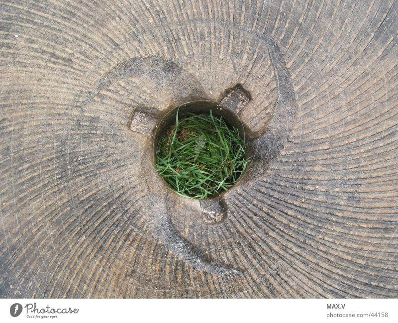Mühlstein grün Pflanze Gras Stein braun Kreis Technik & Technologie Getreide Loch drehen Korn Furche Mehl zerkleinern bearbeitet Elektrisches Gerät