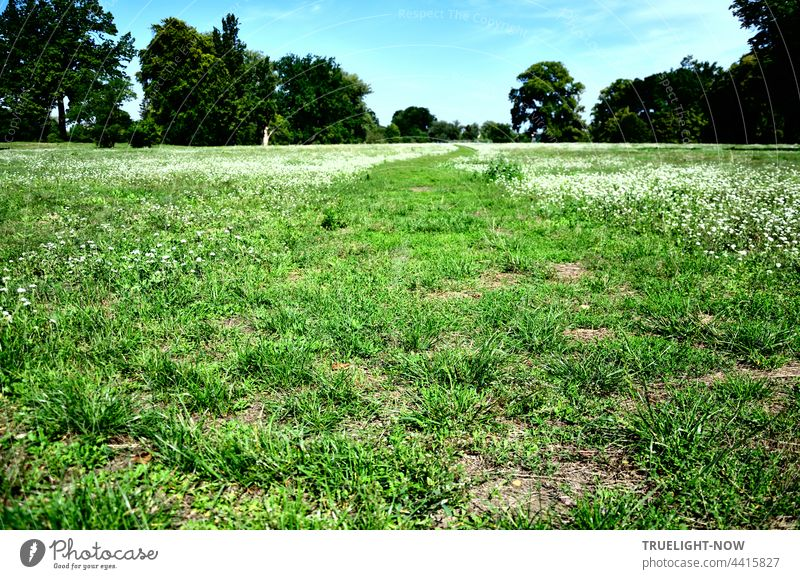 Die grüne Wiese. Mit weißem Blumenteppich. Bäume und Himmel Grüne Wiese Gras gemäht frisches Grün weiße Blumen Park Spielwiese frei Platz Büsche Freiraum