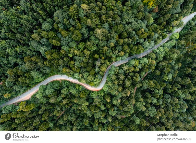 Gegenlicht eines fahrenden Autos auf einer kurvigen Straße als Langzeitbelichtung von einer Drohne, die einen Ausflug in einen grünen Sommerwald am Abend macht.