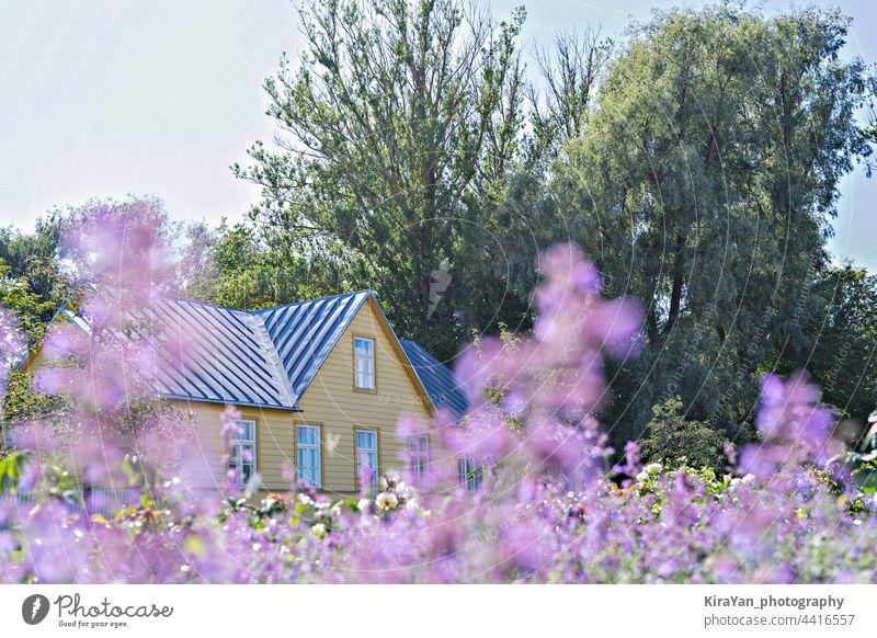 Ertrinken in Blumen Sommerresidenz Haus Landschaft und blühenden lila Wildblumen in Wiese Sommerzeit Wohnsitz Urlaub im Freien ländlich Hochsommer gelb Gebäude