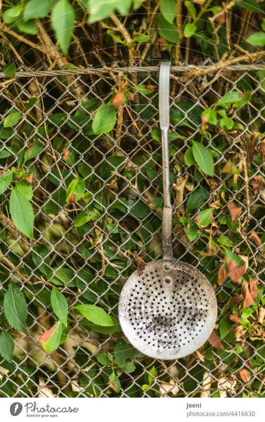 Schöpfkelle am Gartenzaun zum Grillkohle wenden umfunktioniert hängen Zaun Farbfoto Außenaufnahme Menschenleer grün Grenze Tag Pflanze Holz Maschendrahtzaun