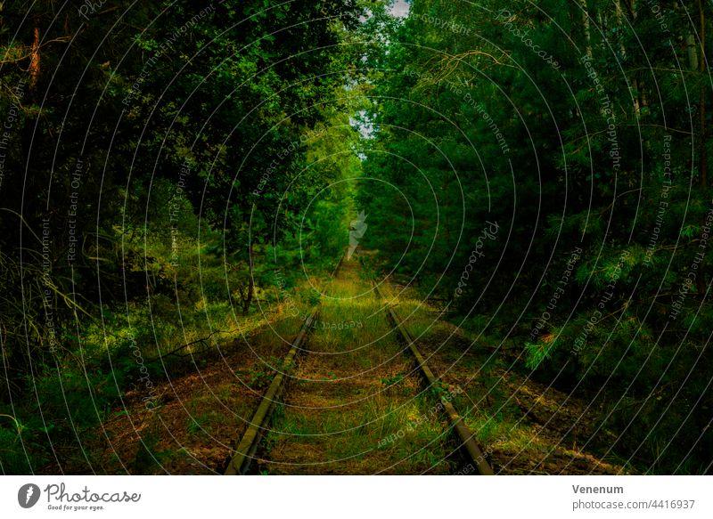 Alte Bahnstrecke, überwuchertes Gleisbett, Wildpflanzen und Bäume neben den Gleisen Schienen Eisenbahn bügeln Rust Eisenbahnschwellen Wald Wälder Baum