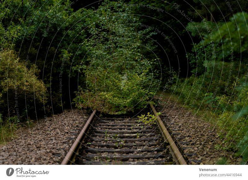 alte Eisenbahnstrecke, überwachsenes Gleisbett, geringe Schärfentiefe, weiches Bokeh Bahn Schienen bügeln Rust Eisenbahnschwellen Wald Wälder Baum Bäume Gleise