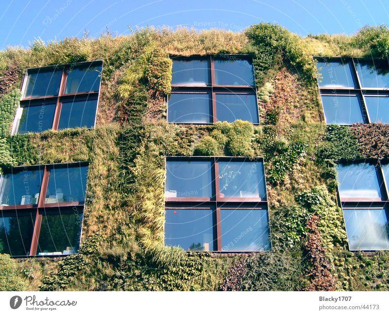 bewachsenes Haus grün Haus Europa Paris Ranke bewachsen