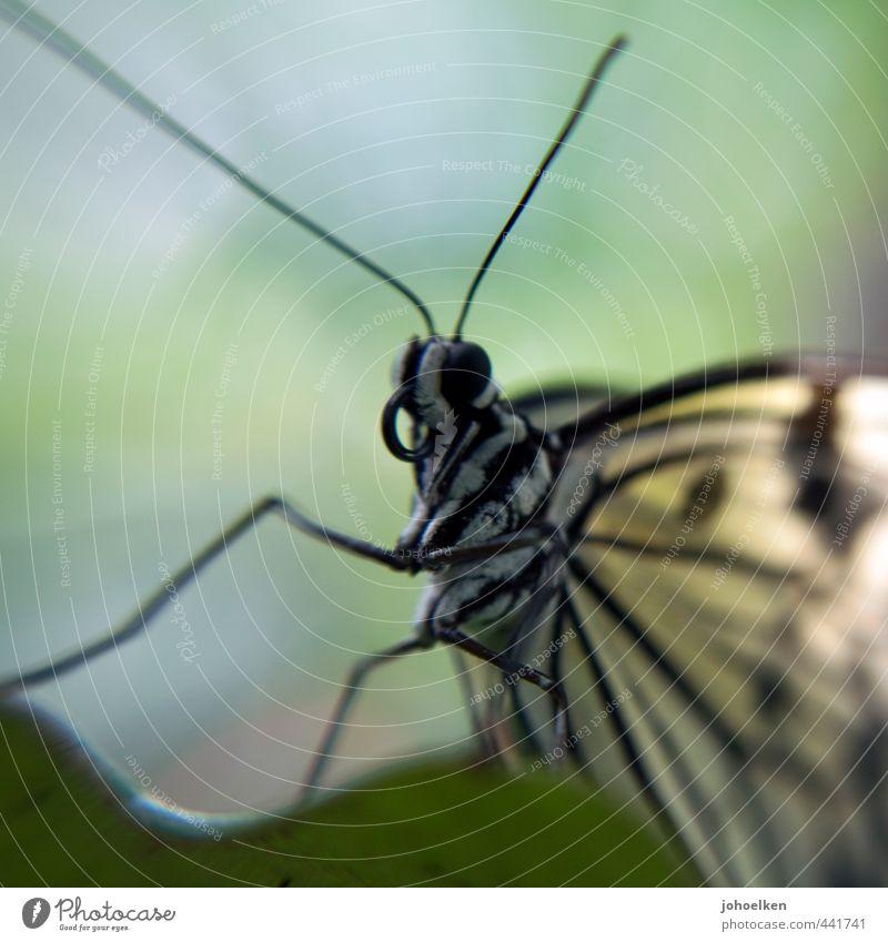 Mikro Elefant mit Flügeln blau grün weiß Tier gelb Liebe Gefühle Essen fliegen Wildtier beobachten Verliebtheit Schmetterling Fressen Leichtigkeit