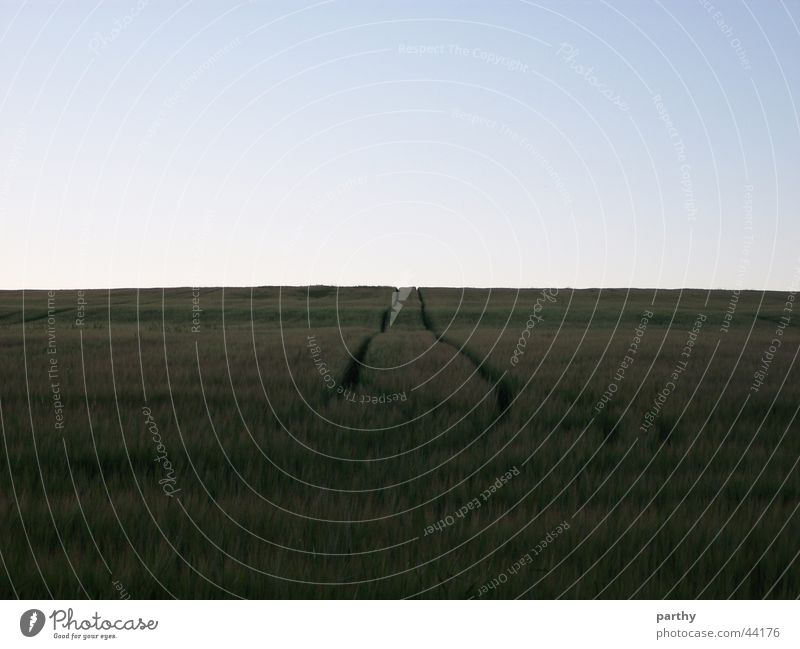 Spuren ins Nichts Feld Getreide Himmel Korn Traktorspur