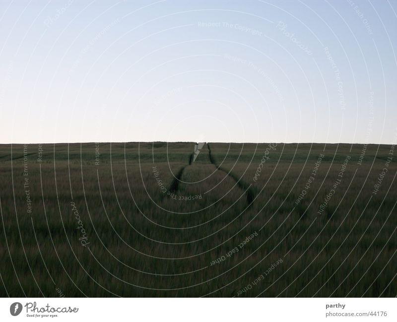 Spuren ins Nichts Himmel Feld Spuren Getreide Korn Traktor