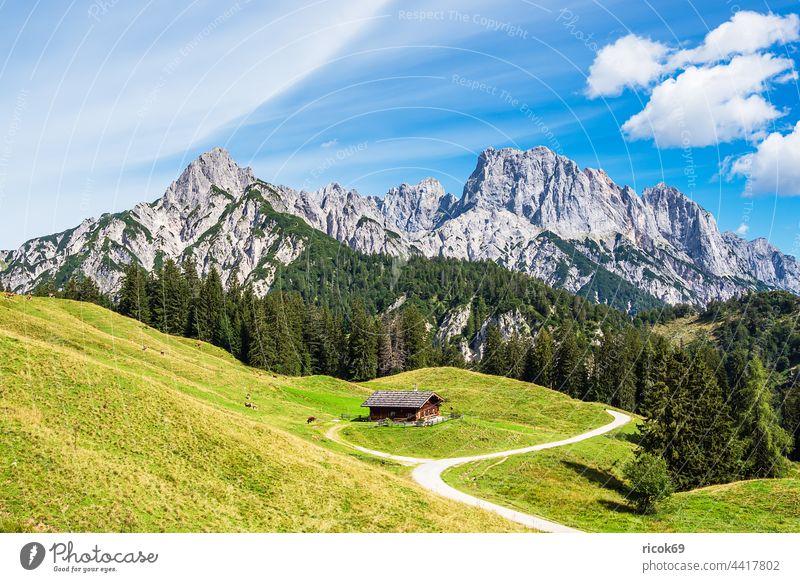 Blick auf die Litzlalm mit Hütte in Österreich Almhütte Alpen Gebirge Berg Baum Wald Wilder Kaiser Landschaft Natur Sommer Wiese Gras Landwirtschaft Viehzucht