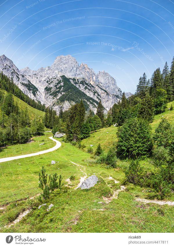Blick auf die Bindalm im Berchtesgadener Land in Bayern Alpen Gebirge Berg Baum Wald Landschaft Natur Sommer Alm Wiese Gras Landwirtschaft Viehzucht