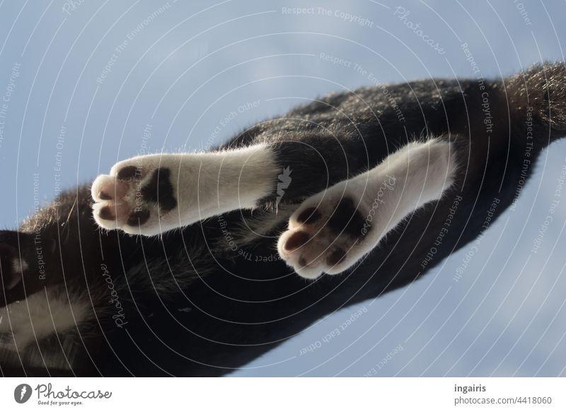 Katzentatzen Haustier Tier schwarz Hauskatze Tag Blick nach oben Tierporträt Farbfoto Katzenpfote katze von unten Pfote Himmel Fenster Fensterscheibe