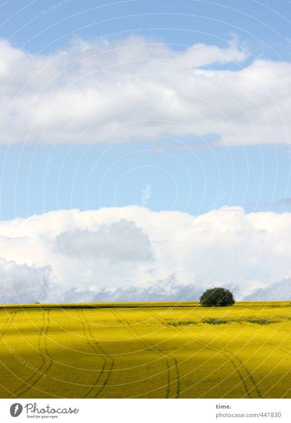 ausgewildert Himmel Natur Pflanze Baum Erholung Einsamkeit Wolken Umwelt Wege & Pfade Freiheit Zeit Horizont Stimmung Feld Erde Wachstum