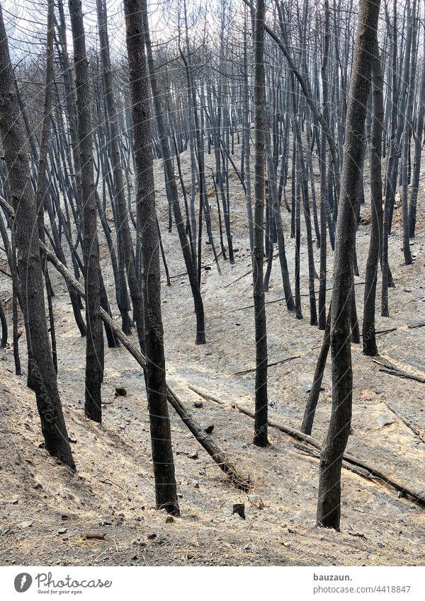 waldbrand. Waldbrand Waldboden Brand Baum Feuer Natur Außenaufnahme Rauch Menschenleer Umwelt Farbfoto gefährlich brennen bedrohlich Holz Sommer verbrannt