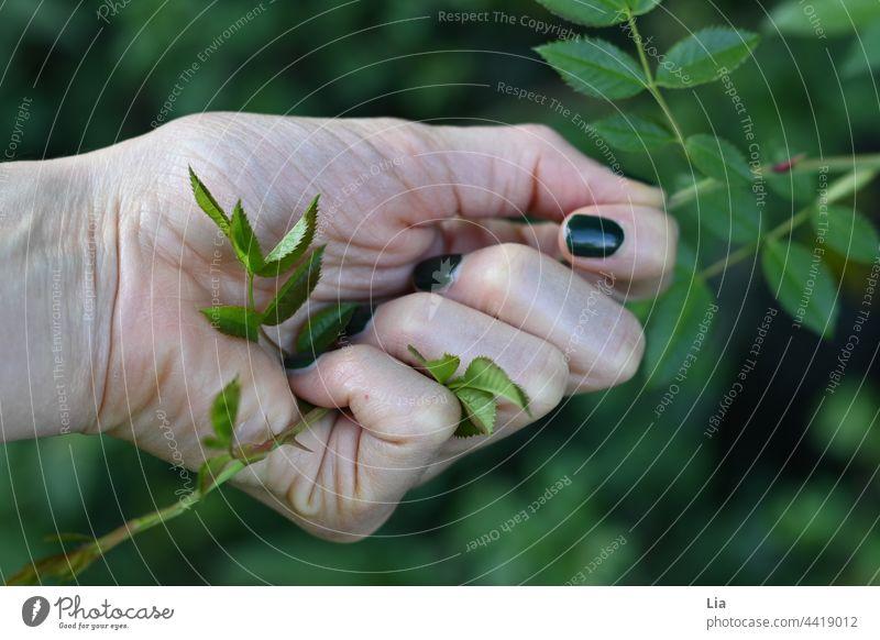 Hand greift Zweig mit Dornen greifen Dornenbusch Dornenstrauch stechend Verletzung Nagellack grün pieksen Schmerz stachelig Nahaufnahme fühlen spüren Pflanze