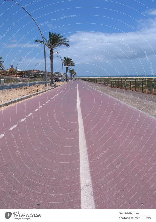 Sind wir bald da? Strand Promenade Uferpromenade Palme Asphalt grün Wolken Esquinzo Ferien & Urlaub & Reisen Fuerteventura Fahrradweg Europa Straße Sand Pflanze