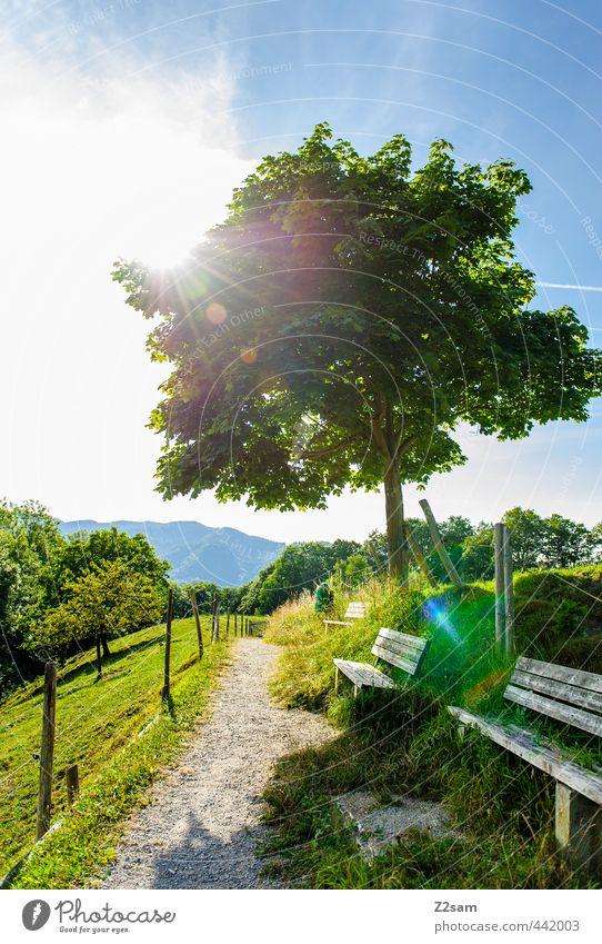 Sonnenplatz Ferien & Urlaub & Reisen Sommer Sommerurlaub Natur Landschaft Wolkenloser Himmel Schönes Wetter Baum Sträucher Wiese Berge u. Gebirge Gipfel