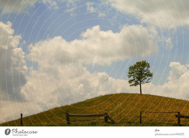 Baum in Feld auf Hügel Wolken Zaun Saublumen Emmental Sumiswald Schweiz Berge u. Gebirge Himmel Kanton Bern
