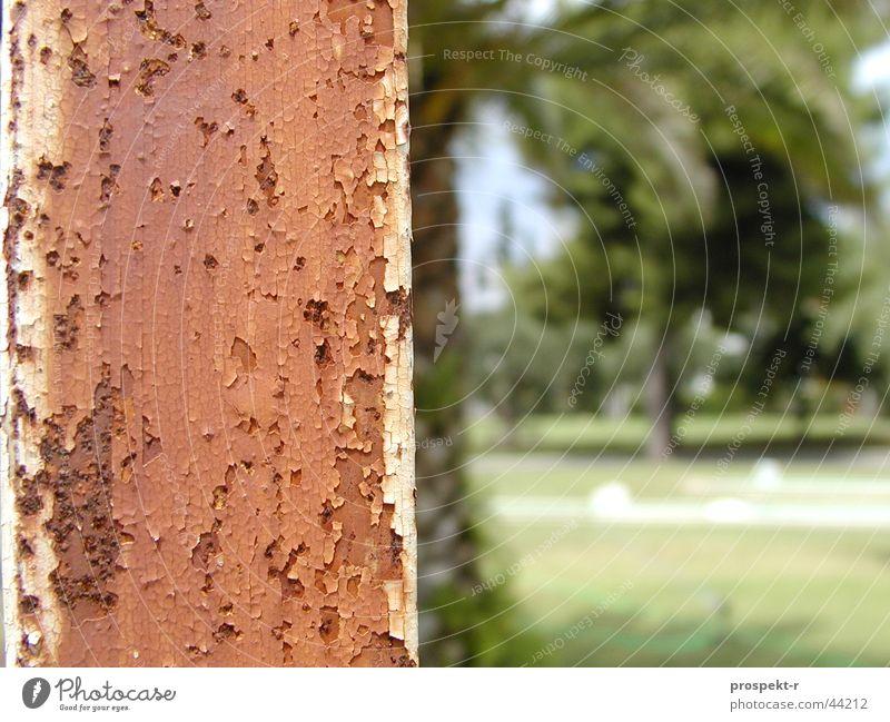 Rost Palme grün braun Minigolf Laternenpfahl Flutlicht Skelett Europa Resort Makroaufnahme