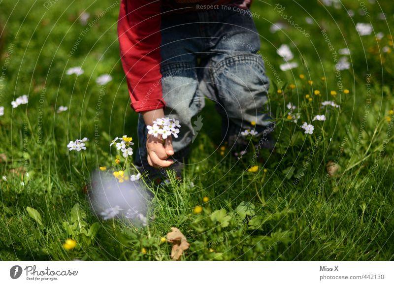 Blumenstrauß Kinderspiel Valentinstag Muttertag Mensch Kleinkind 1 1-3 Jahre 3-8 Jahre Kindheit Frühling Sommer Gras Blüte Wiese niedlich Gefühle Stimmung Liebe