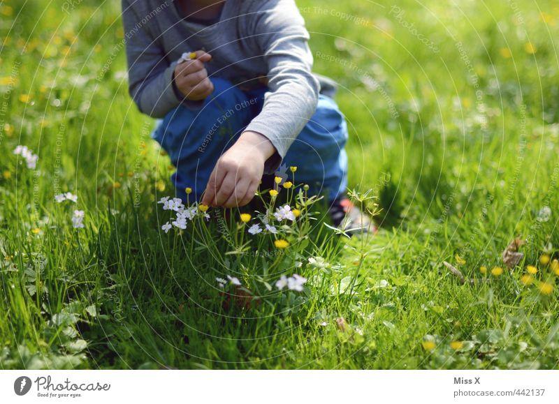 Pflücken Freizeit & Hobby Muttertag Mensch Kind Kleinkind Kindheit 1 1-3 Jahre 3-8 Jahre Frühling Sommer Blume Blüte Wiese niedlich Gefühle Stimmung Sympathie