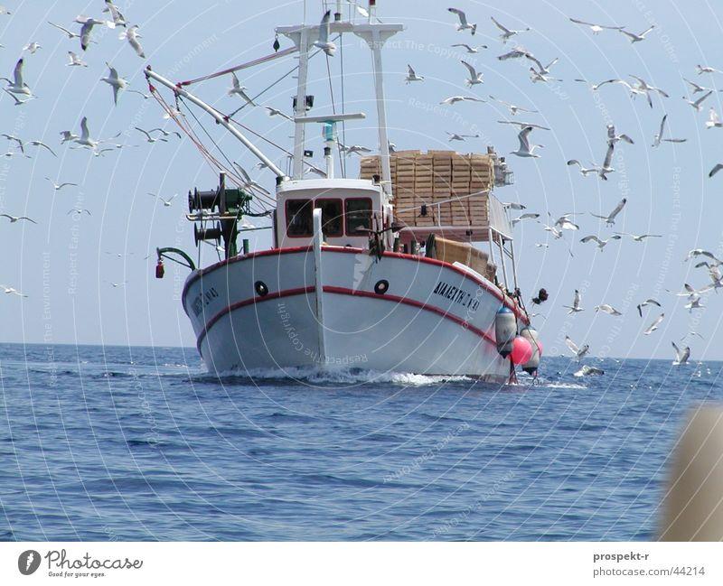 Der Schwarm der Möwen Wasser Himmel Sonne Meer blau Arbeit & Erwerbstätigkeit Vogel Wellen direkt Schifffahrt Angeln Fischerboot Kollision