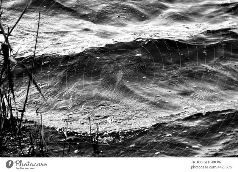 Gefrorene Zeit. Im Hier und Jetzt lebendig. Gestern. Und Morgen | Wasser, Wellen, Fluss, Ufer, Strand, Grashalme, schwarz-weiss, nah Wellengang Sand Natur