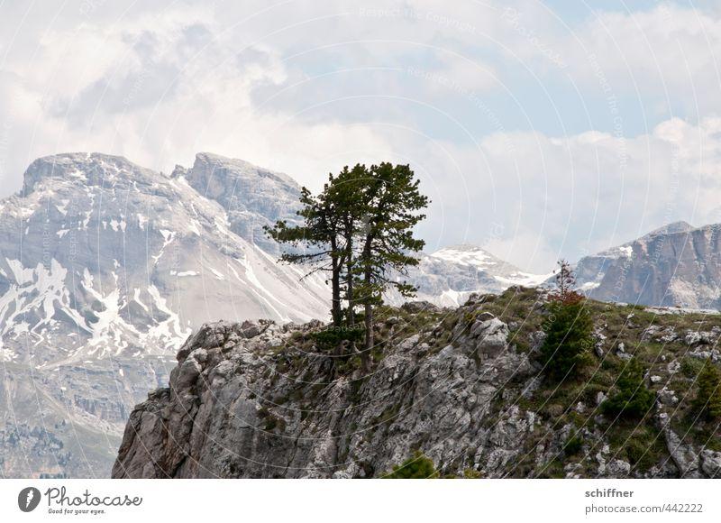 Gruppenkuscheln aufm Fels Umwelt Natur Landschaft Wolken Klima Schönes Wetter Pflanze Baum Hügel Felsen Alpen Berge u. Gebirge Gipfel Schneebedeckte Gipfel