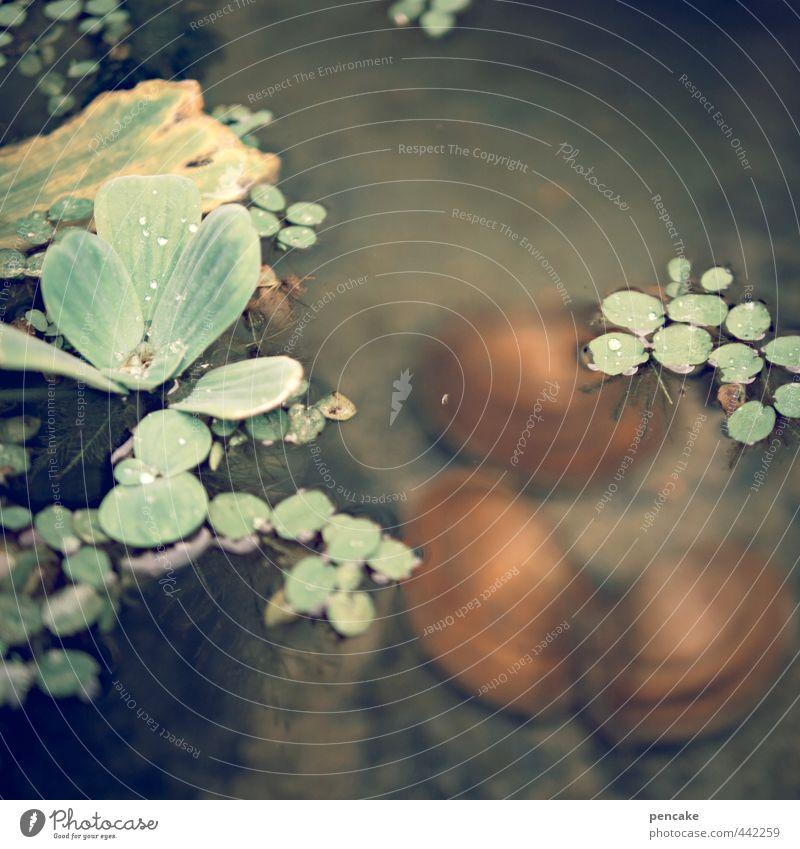 muschelgruppe Natur Wasserpflanze Teich Muschel Süßwasser 3 Tier Tiergruppe Zeichen ästhetisch außergewöhnlich nass feminin gold grün orange träumen geschlossen