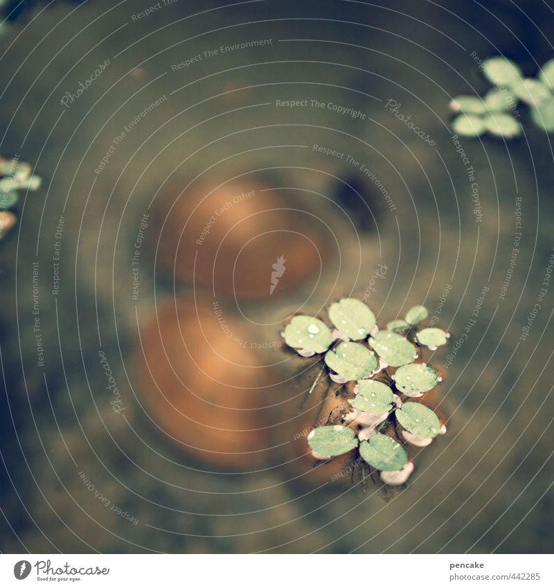 muschelsuppe Natur grün Wasser Sommer Pflanze Tier kalt natürlich Garten orange nass Urelemente weich Zeichen Im Wasser treiben Teich