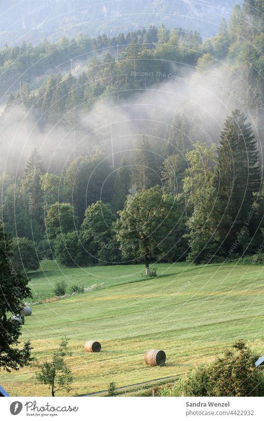 Nebel Urlaub Sommer Bergwiese Wald Berge Ursprung Natürlichkeit Landwirtschaft Heuballen Sommerwiese Morgenluft Kärnten Felder Wiese grün Bäume Gesundheit Natur