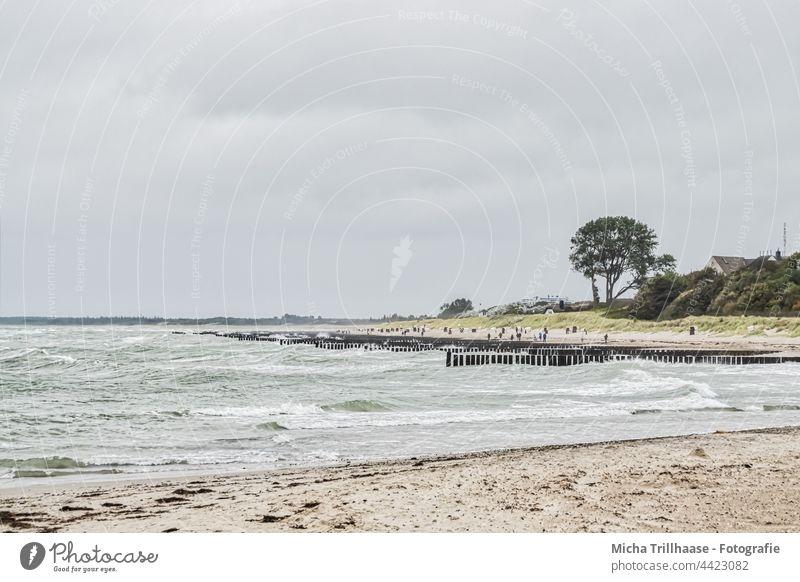 Ostseestrand bei Wind und Wellen Darß Fischland-Darß-Zingst Ahrenshoop Steilküste Strand Küste Wasser Buhnen Meer Sand Bäume Wald Himmel Wolken Sonne Natur