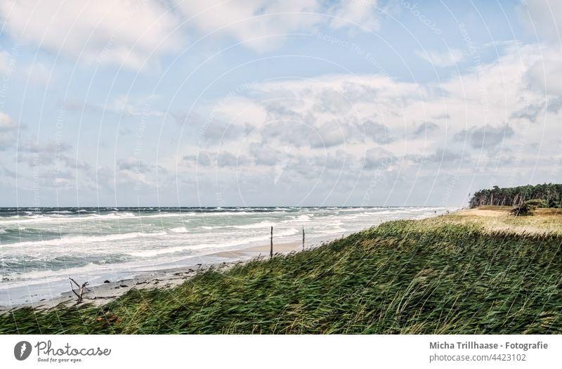 Weststrand Fischland - Darß Fischland-Darß-Zingst Strand Ostsee Küste Wellen Wasser Meer Sand Bäume Wald Himmel Wolken Wind Sonne Natur Landschaft