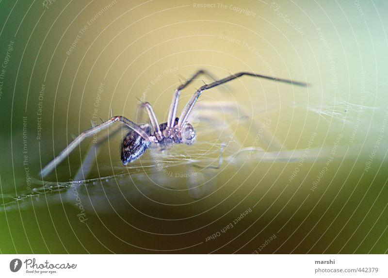 Mini-Spider Natur Pflanze Tier grau Angst Ekel Spinne Spinnennetz