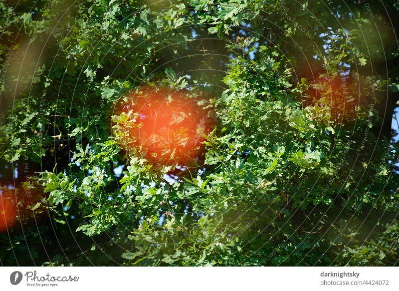 Natur in einem Park oder Wald mit reifen Vogelbeeren einer Sorbus Art, Sorbus scalaris orange grün Sommerzeit Landschaft Herbst Blatt Umwelt im Freien Gras