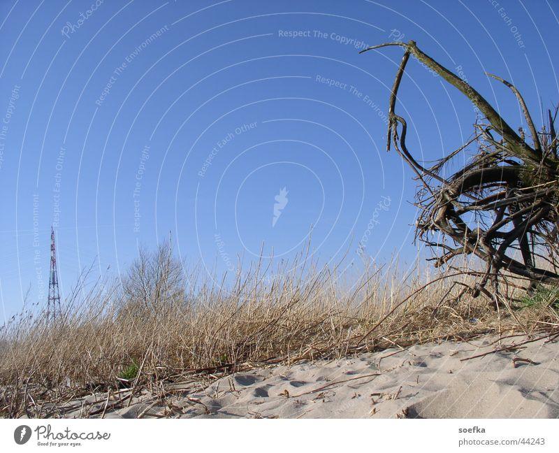 Elbstrand Himmel blau Strand Sand Sträucher Elbe