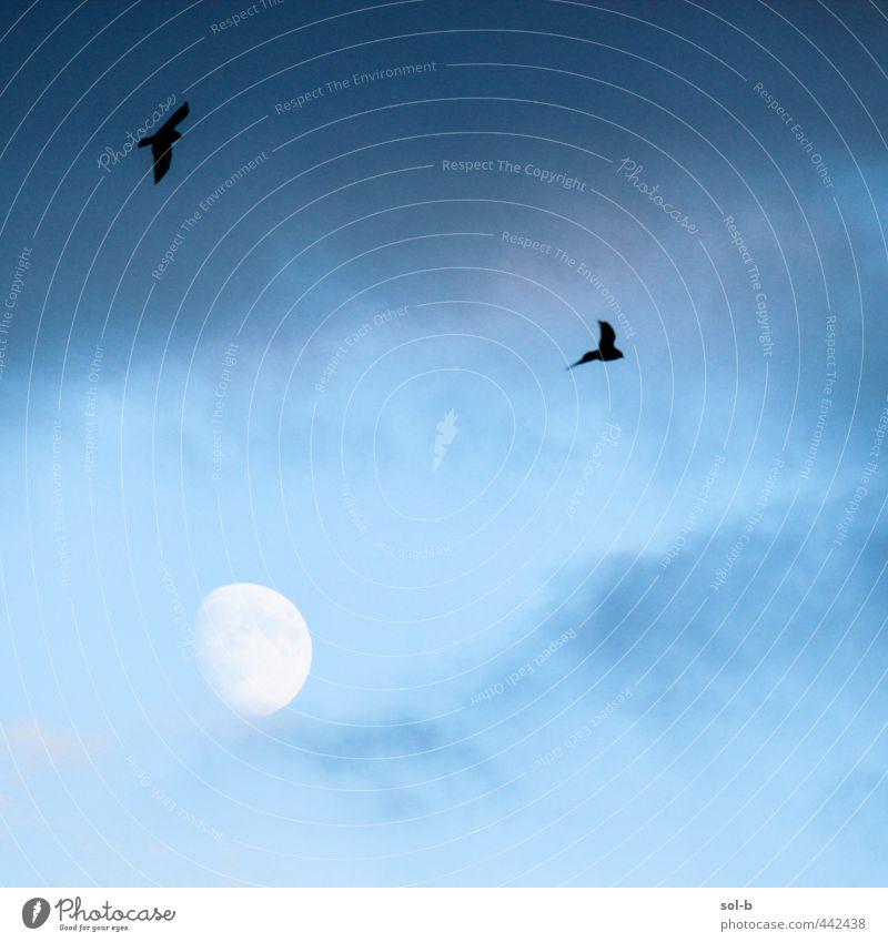 Himmel Natur blau Wolken Tier dunkel kalt oben natürlich träumen Luft Vogel fliegen frei Sturm Mond