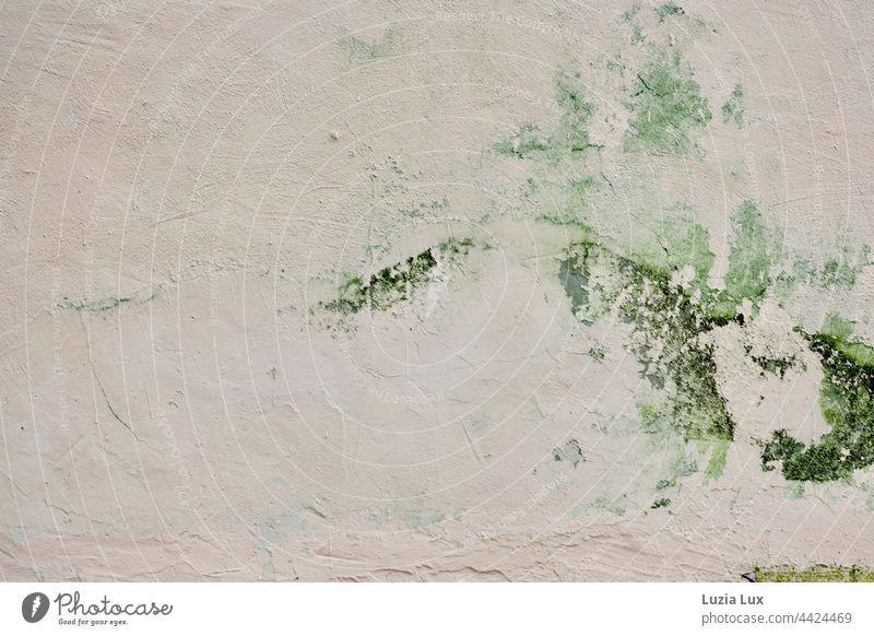eine alte Hauswand mit anmutiger Algenzeichnung Grünalgen Wand Putz Rauputz zart Zeichnung Mauer Fassade bröckeln bröckelnde Fassade rosa Verfall Gebäude