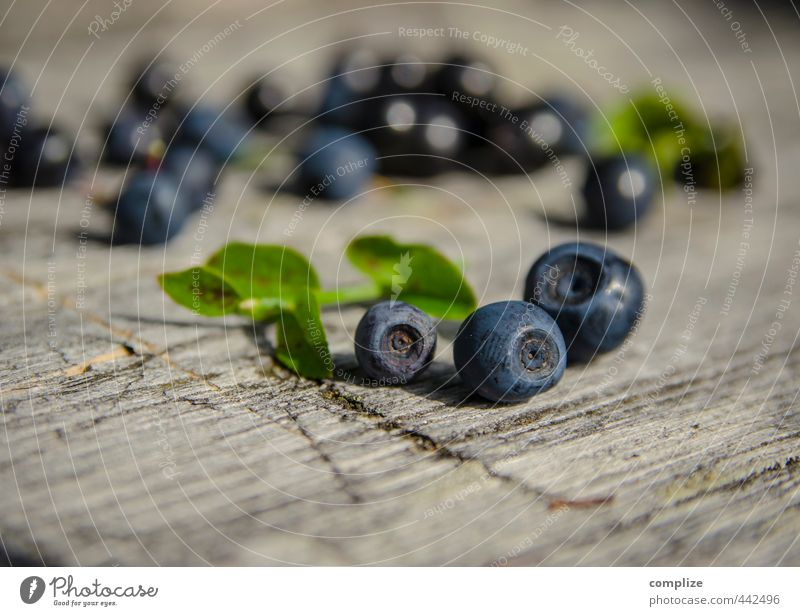 Blauer Bär Lebensmittel Frucht Ernährung Picknick Vegetarische Ernährung Gesundheitswesen Fitness Wohlgefühl Sommer Nutzpflanze entdecken wild blau Blaubeeren