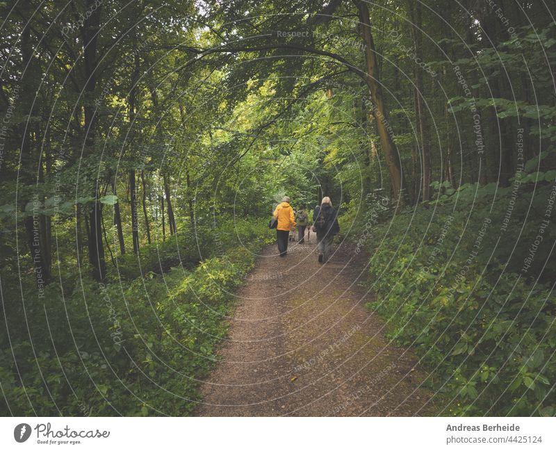Eine Wandergruppe in einem alten Mischwald an einem regnerischen Tag wandern Menschengruppe Erwachsener Erholung Gesundheit Zusammensein im Freien Spaziergang