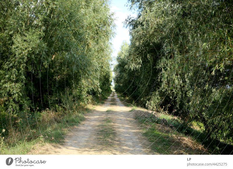Fußweg durch den Wald glauben beten Gebet Hoffnung Spiritualität Glaube Frieden Ruhe außergewöhnlich Fernweh Beginn heilig Christus Jesus Haus Gottes Windstille