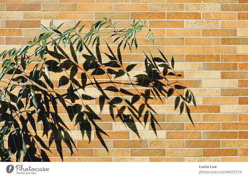Zweig mit grünem Laub, dahinter sein viel größerer Schatten an einer braun- und orangefarbenen Außenmauer Blätter Sonne sonnig hell Schattenspiel Natur Licht